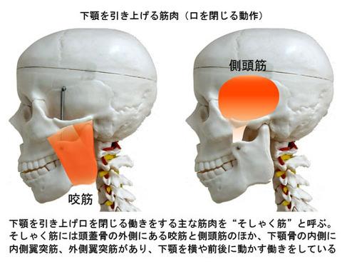 下顎を引き上げる筋肉
