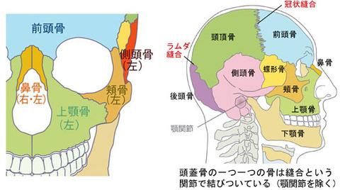 頭蓋骨の縫合