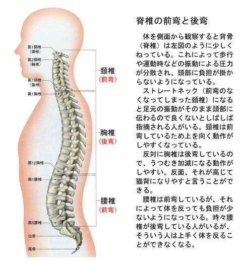 脊椎の前弯と後弯