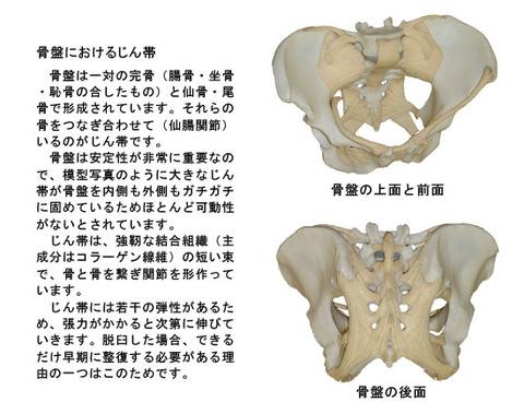 骨盤における靱帯
