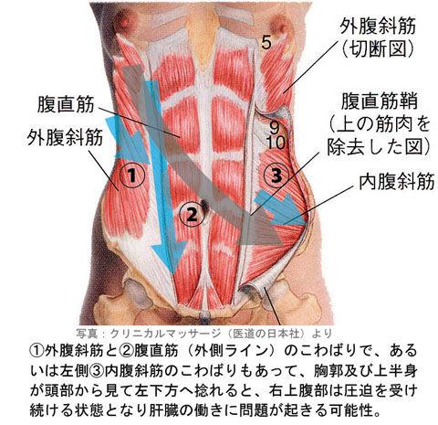 肝臓の圧迫