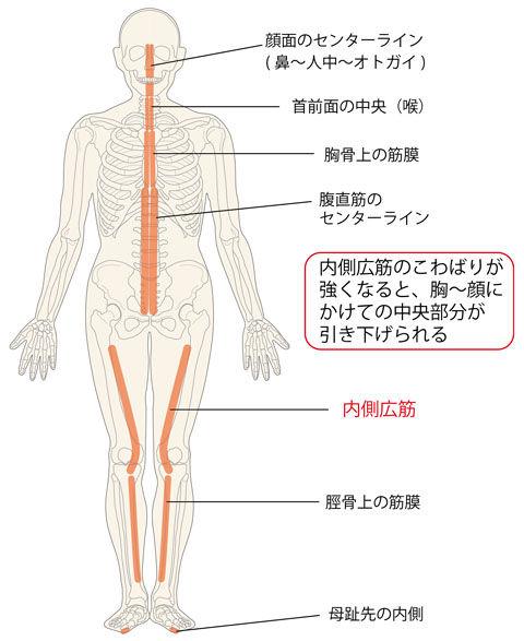 内側広筋の「こ」に連動する部位