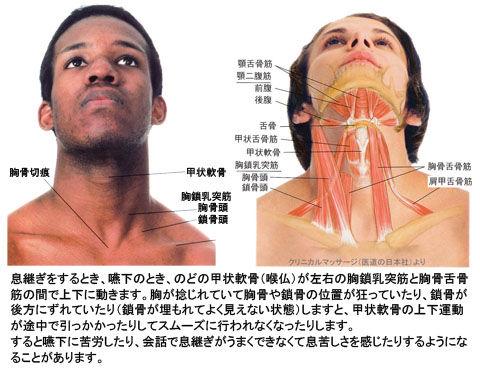 甲状軟骨と舌骨筋群