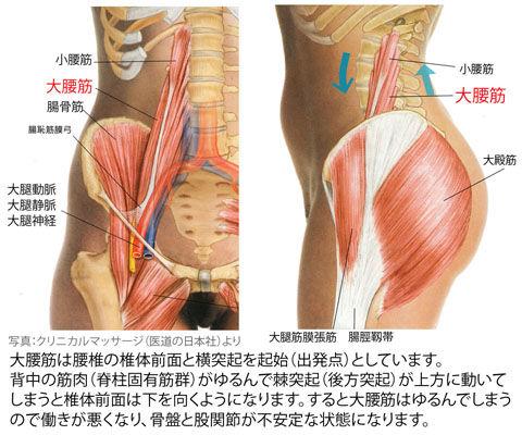 大腰筋の前面と側面
