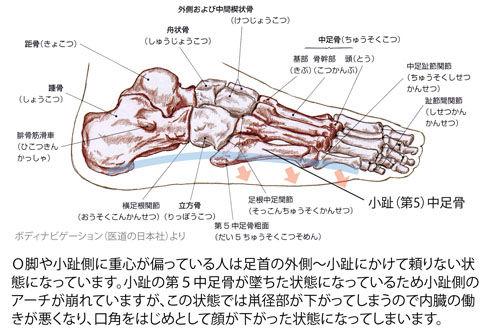足の外側の骨格(小趾アーチ)
