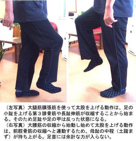 前脛骨筋と第3腓骨筋01