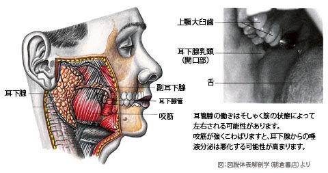 耳下腺01