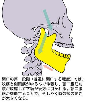 顎関節の動き02