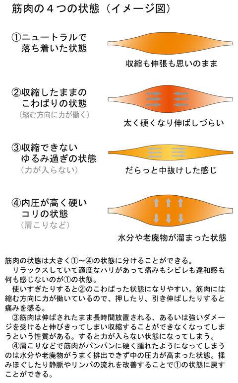 筋肉の4つの状態