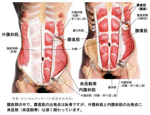 鼡径部は腹筋の起始部