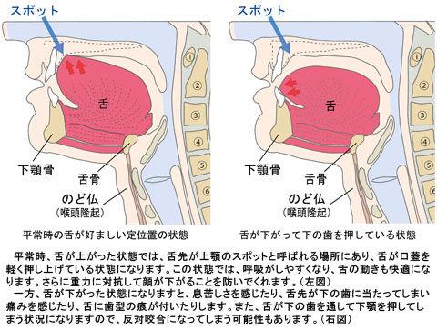 舌の位置2