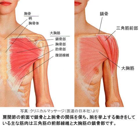 肩関節前面の大胸筋と三角筋