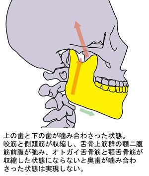 顎関節の動き04