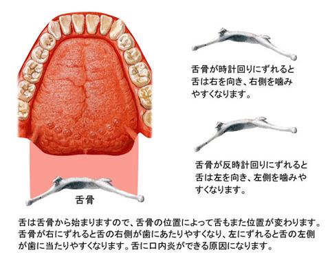 舌と舌骨の関係