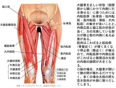 O脚と下肢の筋肉・骨格01