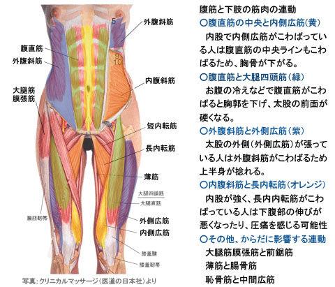 腹筋と下肢筋肉の連動