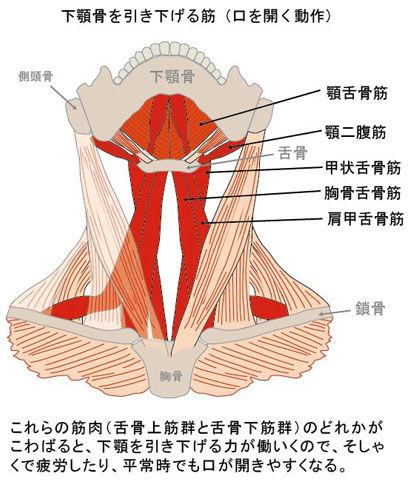 下顎骨を引き下げる筋