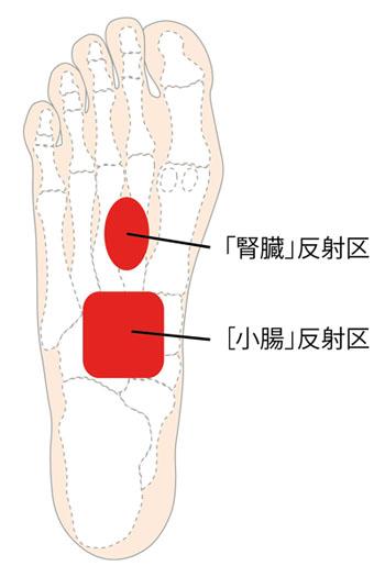 腎と小腸反射区