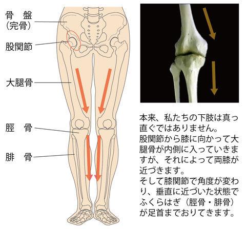普通の下肢(O脚ではない)