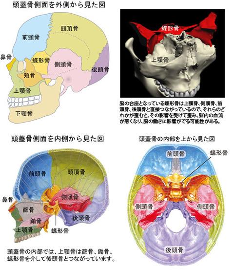 脳の働きと蝶形骨の歪み