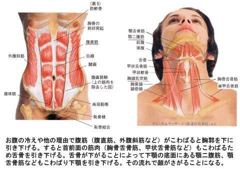 腹筋のこわばりによる顔の下がり