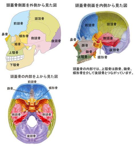 頭蓋の内部図