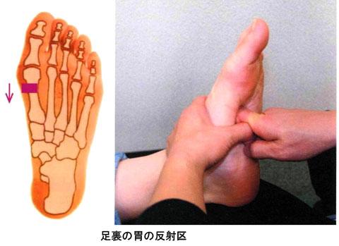 足裏_胃の反射区