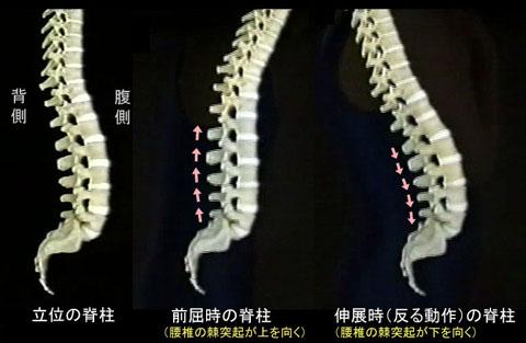 脊柱の動き