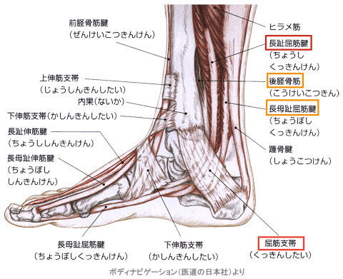 足首の屈筋支帯