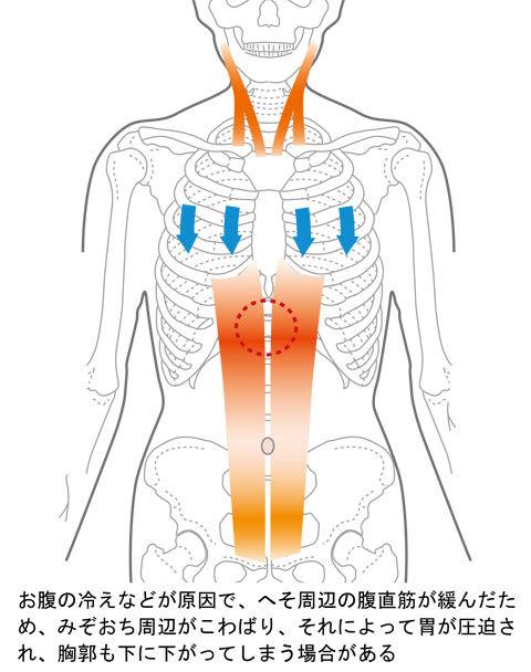 臍の「ゆ」によって胸郭が下がり胃を圧迫
