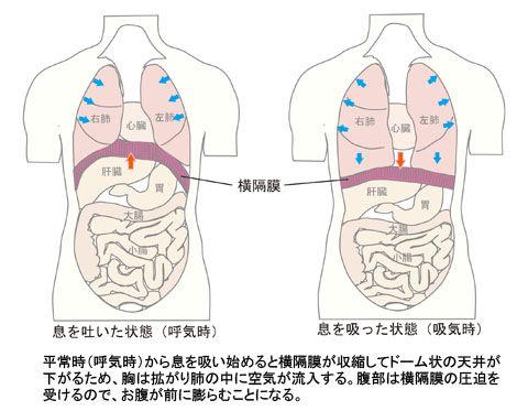 横隔膜_呼気吸気
