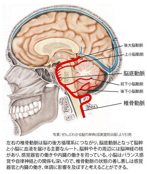 椎骨動脈の流れ