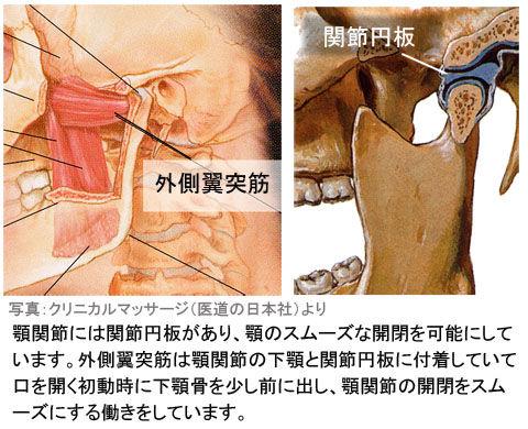 外側翼突筋と関節円板
