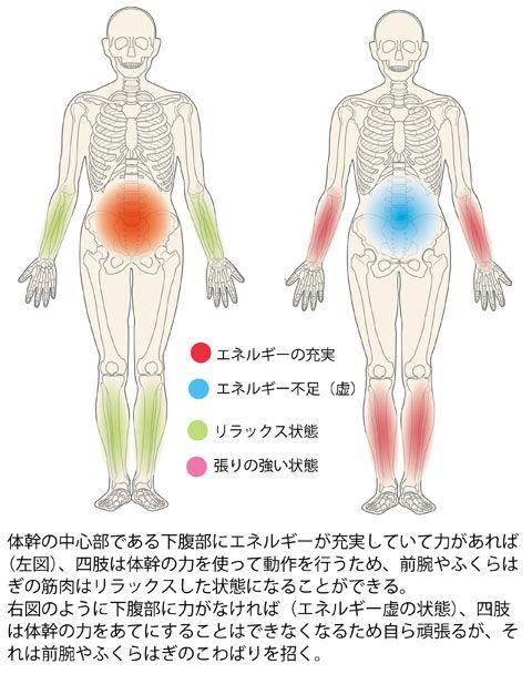 体幹と四肢の関係(エネルギーと筋肉の変調)
