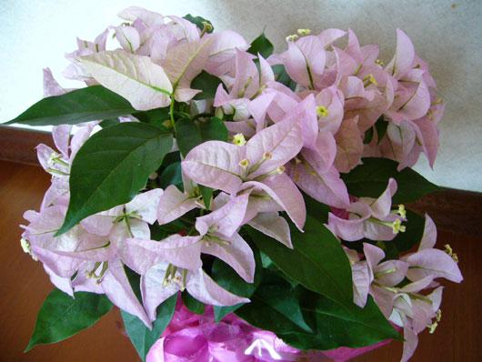 宮子花園さんからいただいたお花