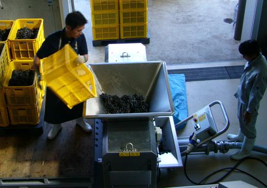 ワイン造りの工程3