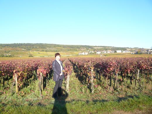 ブルゴーニュのぶどう畑の前で
