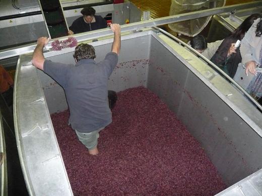 ブルゴーニュの醸造