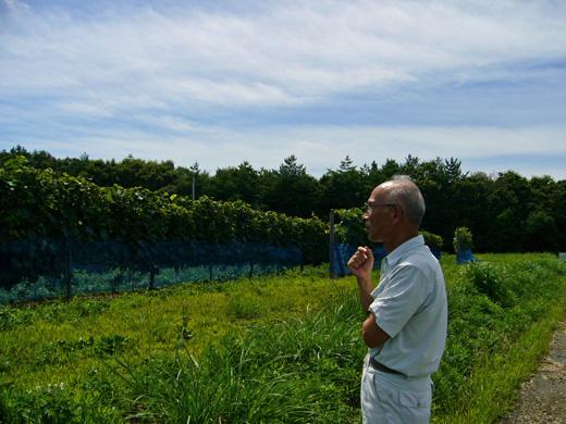 畑を見つめる豊田さん