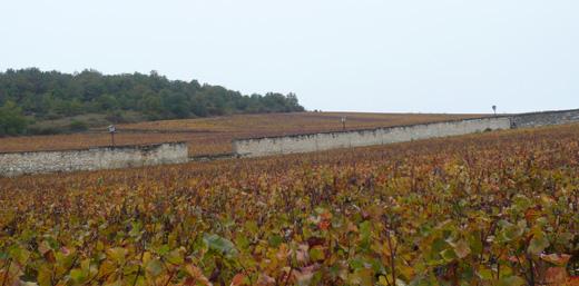 ブルゴーニュの畑
