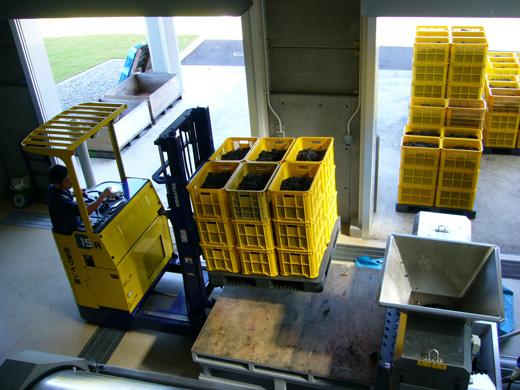ワイン造りの工程2