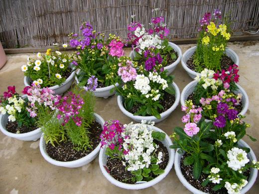 宮子花園さんのお花