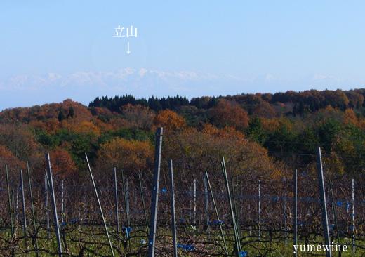 能登ワインの畑から見える立山