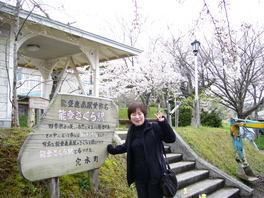 能登鹿島駅の桜
