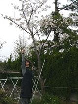桜の木の下で・・ふふふっ