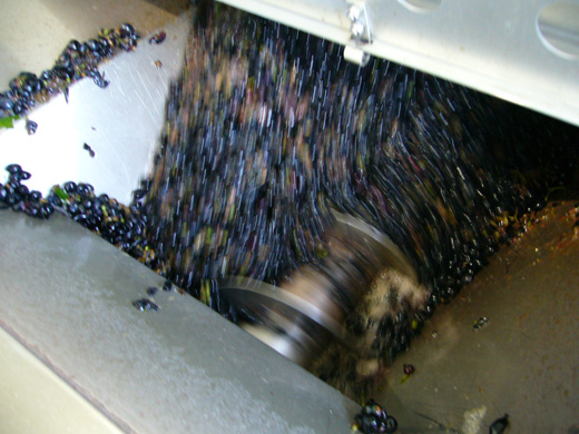 ワイン造りの工程4