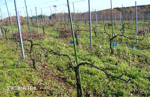能登ワインの12月の畑