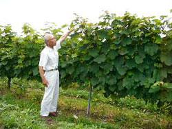 能登ワイン畑3