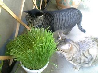 猫草と2ひき