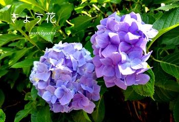 17-06-12-01-04-43-008_deco